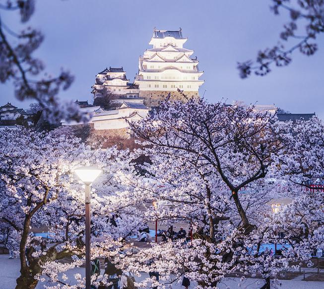 Lost-in-Kyoto-and-the-sakura-blossom-59101a5ed5e3c__880