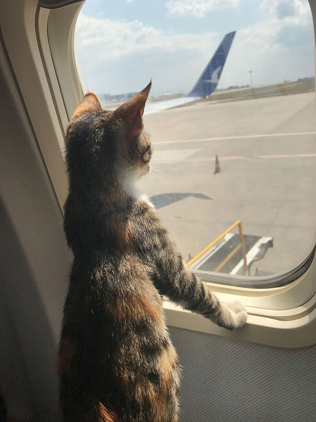 travelling-pets-support-animals-203-5fdcc72106964__700