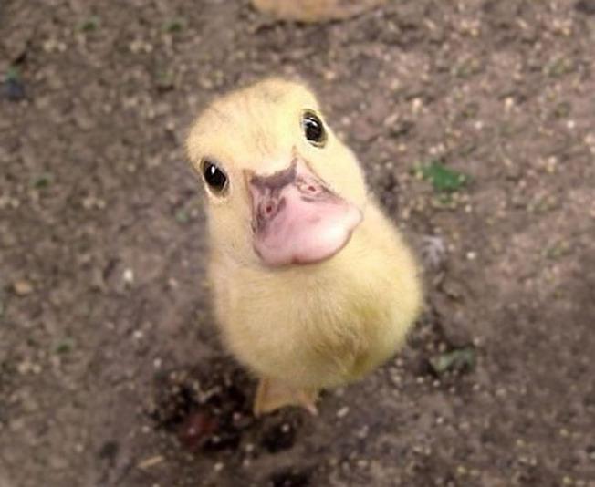 adorable-baby-animals-24-614d8040b62a1__700