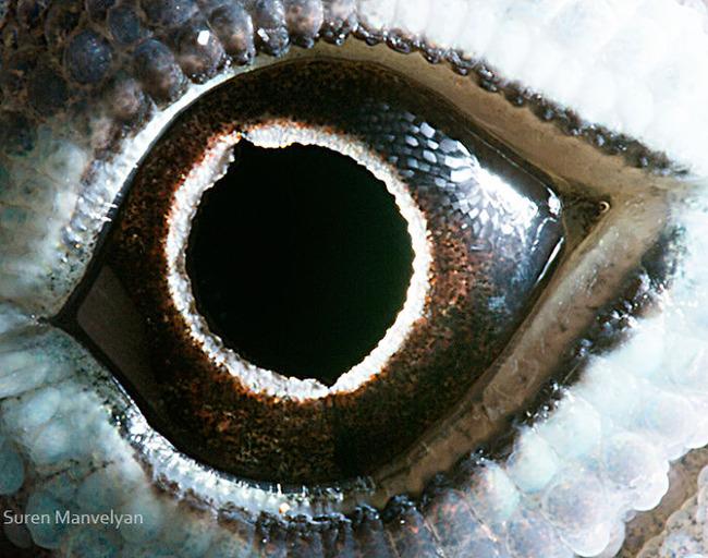 animal-eyes-photography-suren-manvelyan-7-5f4e18e7b51b5__700