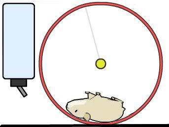 dead-hamster