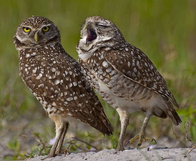 comedy-wildlife-photography-awards-finalists