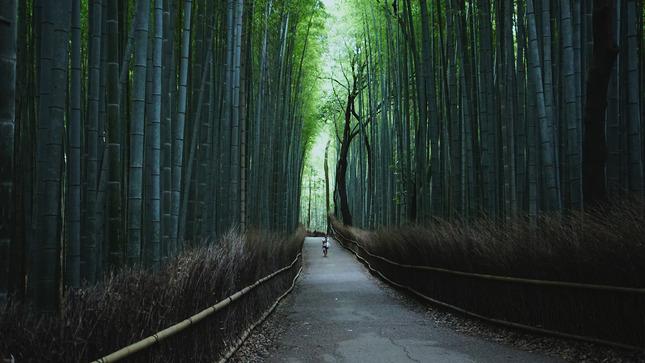 20 - Kyoto - Arashiyama Bamboo Grove