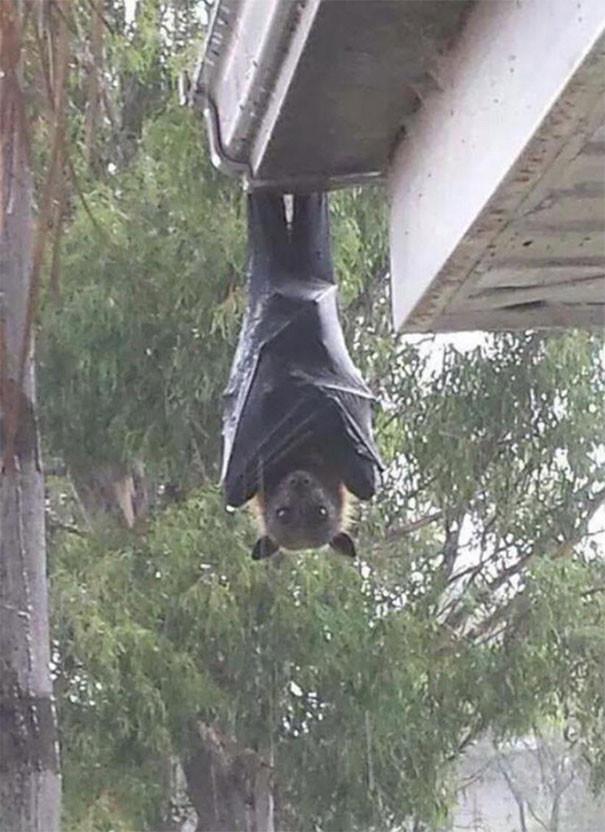 australia-scary-nature-animals-3-5d1b46e75d24b__605