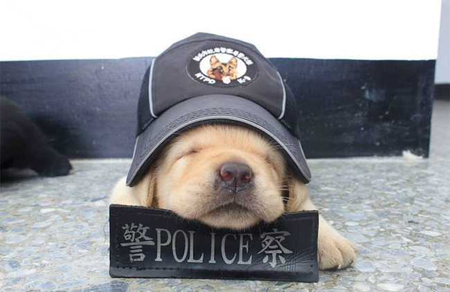 adorable-puppies-police-training-5f461cc2bc173__700