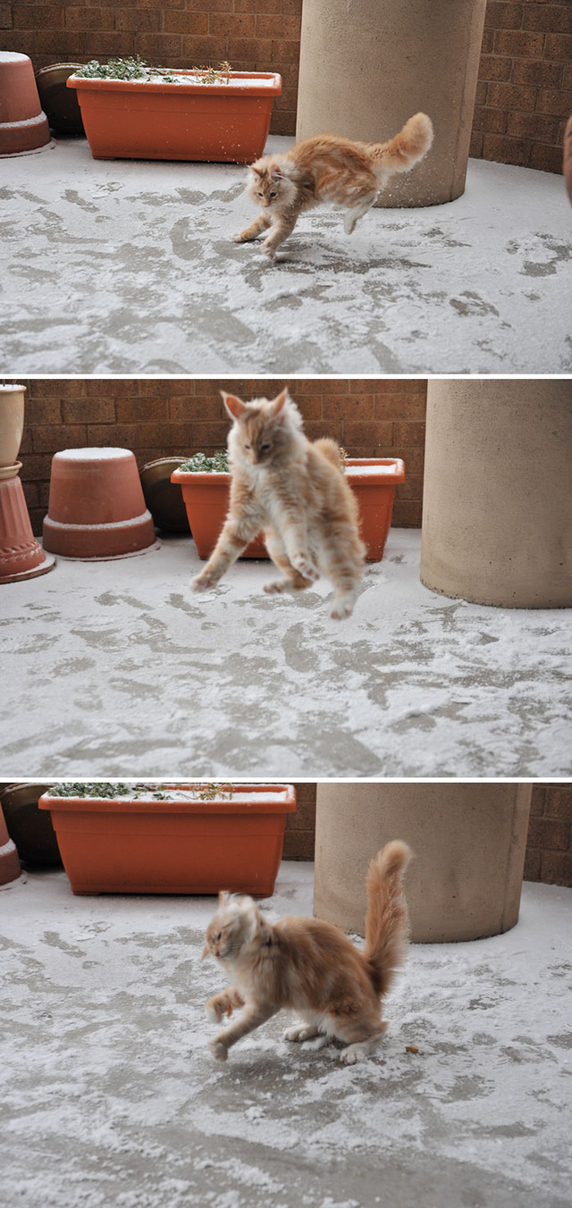 funny-animals-first-snow-cats-dogs-103-5a5491ec2b38e__700 (1)