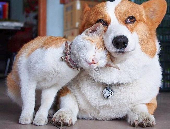 cute-similar-animals-214-6124d90bb9218__700