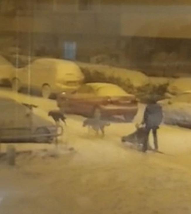 biggest-snowfall-50-years-spain-12-5ffc0ec921ae1__700