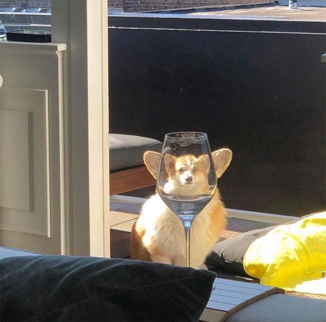 pets-animals-behind-glasses-5f2cf7436fad1__700