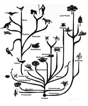 strom-zivota