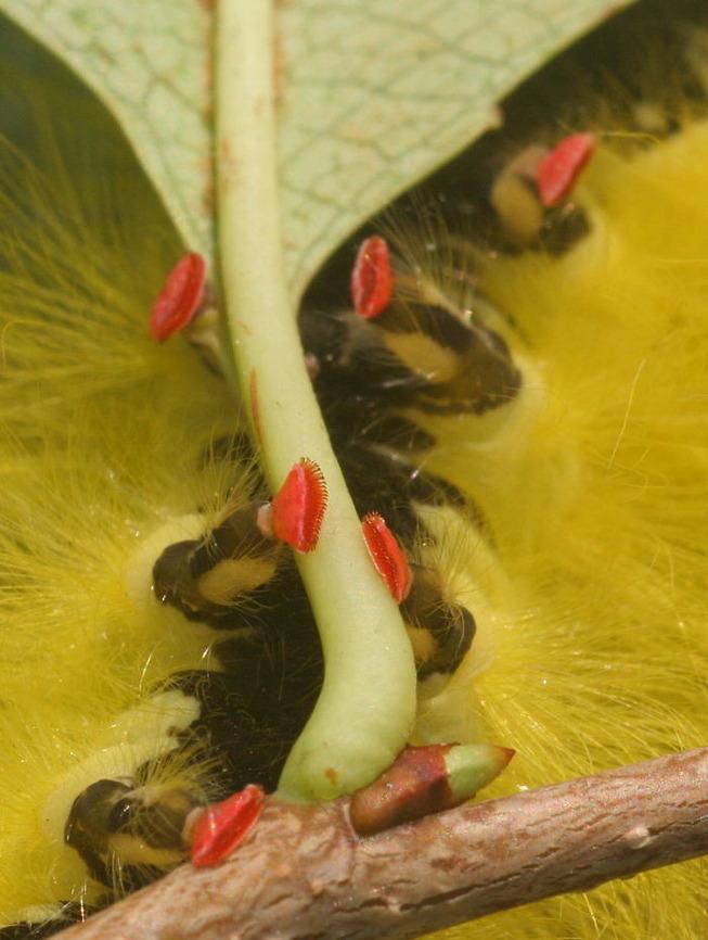 caterpillar-feet-27-5ef0a4c8e23eb__700