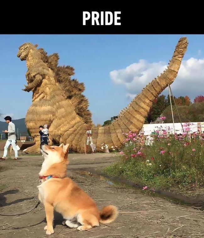 funny-cute-shiba-inu-dog-seven-deadly-sins-2-5a12ad816e78e__700