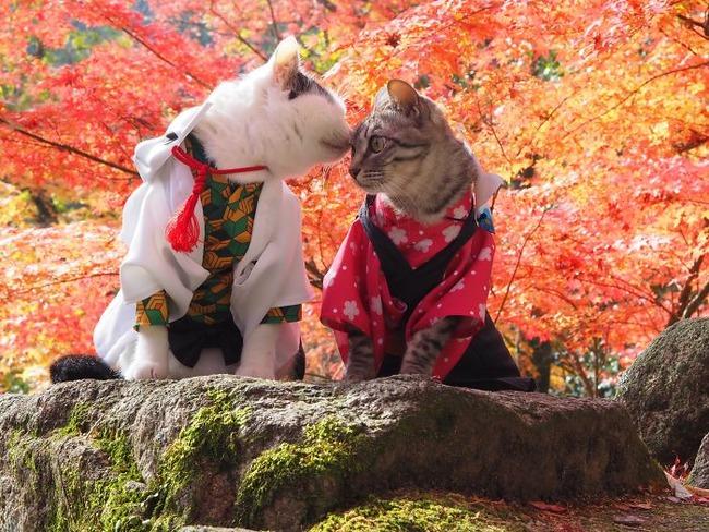 cats-anime-costumes-yagyouneko-japan-5f48cbaef3b36__700