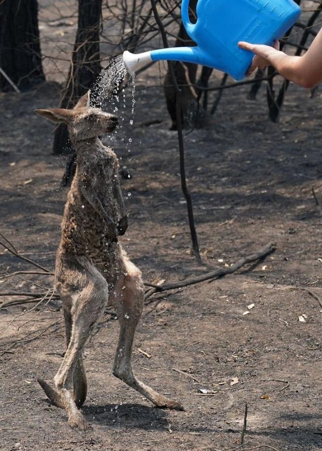 australia-fires-photos-9-5e12e317c3bed__700