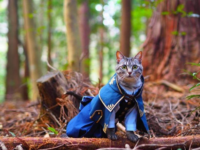 cats-anime-costumes-yagyouneko-japan-5f48f5691a55a__700