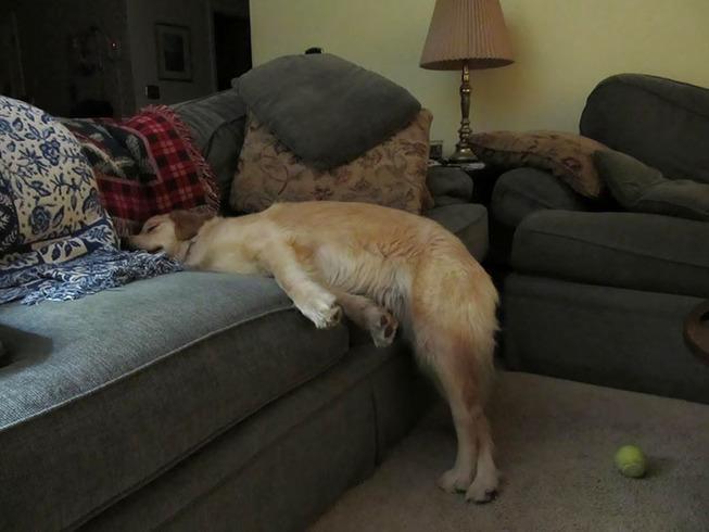 funny-dog-sleeping-positions-108-5d5fb4ce3694e__700