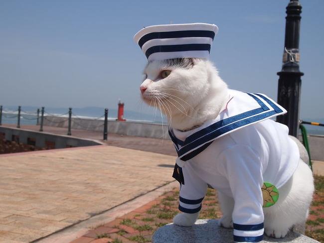 cats-anime-costumes-yagyouneko-japan-5f48c5094258b__700