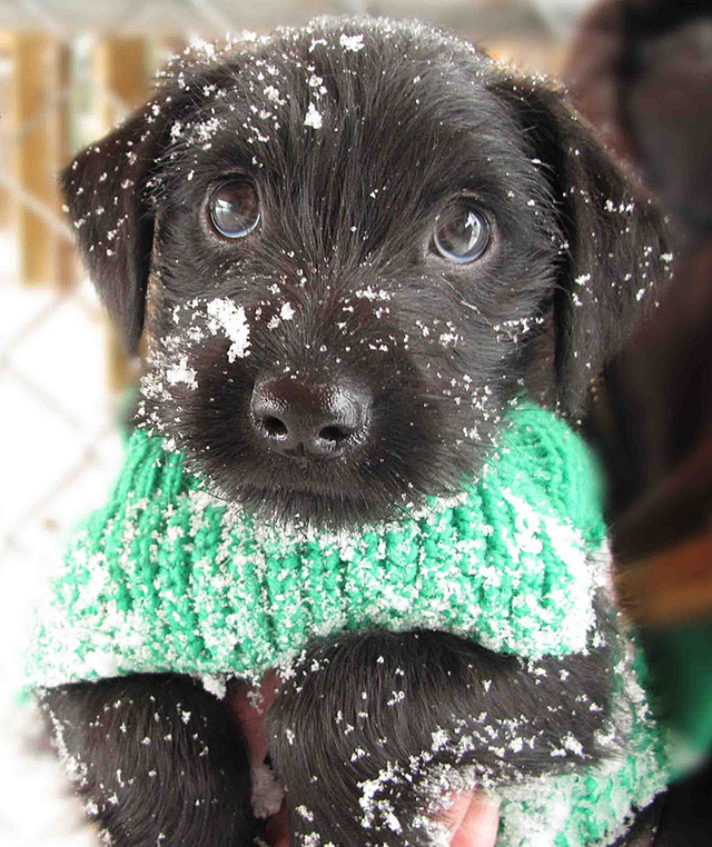 animals-and-first-snow-puppy-2__700