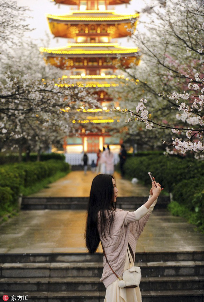 cherry-blossoms-spring-china-4-5ab2666d0d853__880