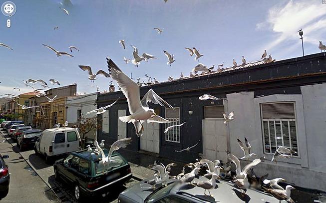 google-street-animals-5d2441d20540f__700