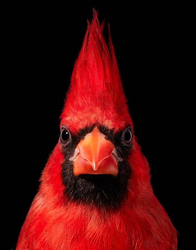 endangered-photo-portraits-birds