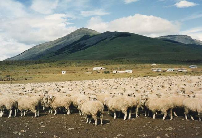 probus-nz-sheep-farming