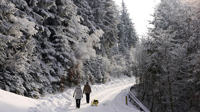 Winter_forest_at_Blomberg,_Germany