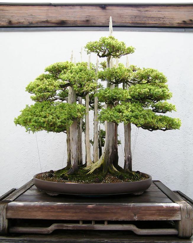 amazing-bonsai-trees-13-5710ed962c1f6__700 (1)