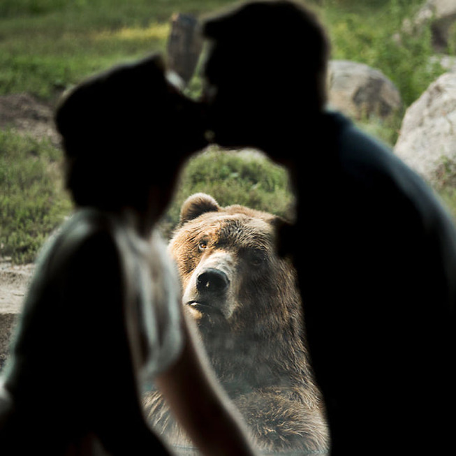 bear-photobombs-wedding-5b9a0638ac29e__700