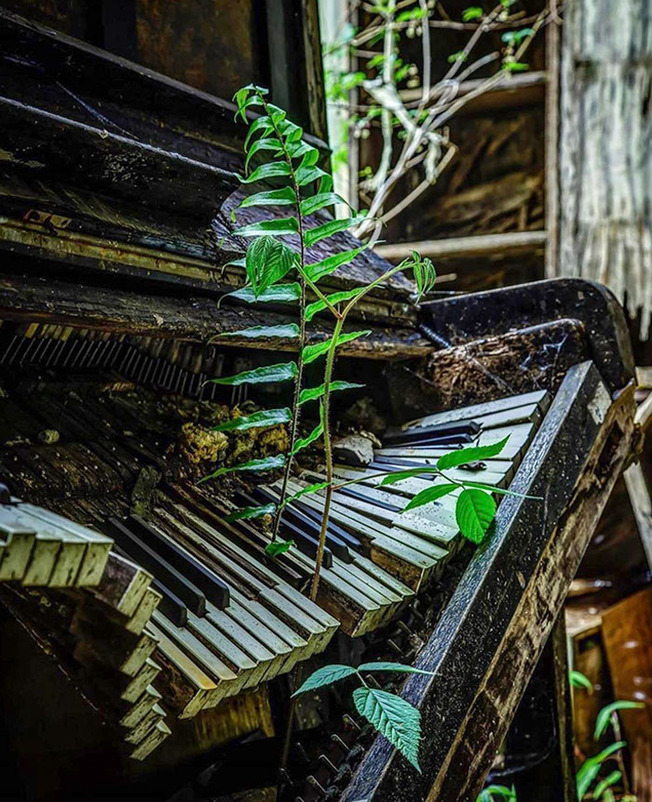 nature-reclaiming-civilization-520-603d1435db451__700