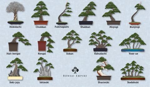 bonsai-styles