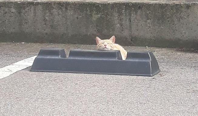cats-sleeping-parking-lot-curves-5f215d053cca0__700