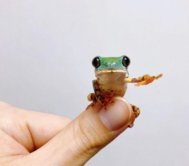 cute-tiny-finger-animals-13-5f84576373263__700