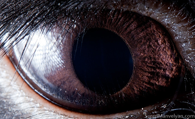 animal-eyes-photography-suren-manvelyan-39-5f4e194b4e853__700