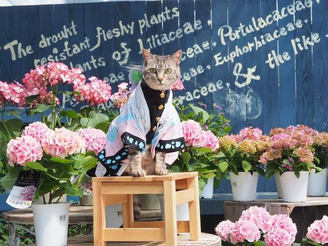 cats-anime-costumes-yagyouneko-japan-5f48c4aeb019f__700