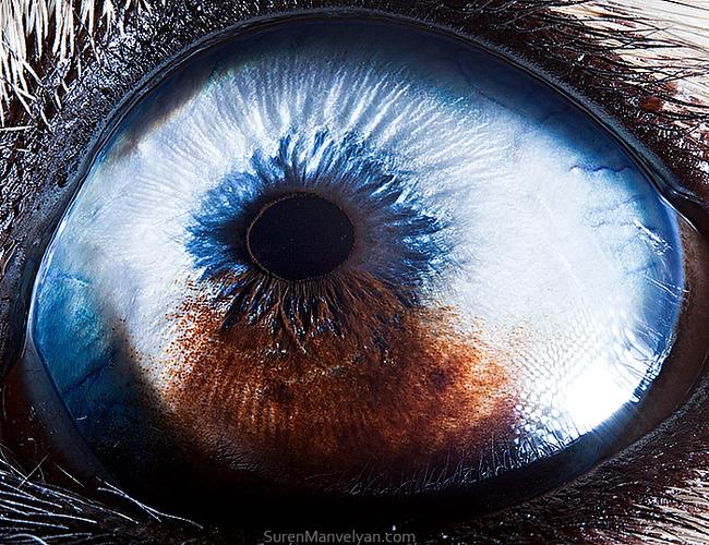 animal-eyes-photography-suren-manvelyan-44-5f4e1958cd99f__700