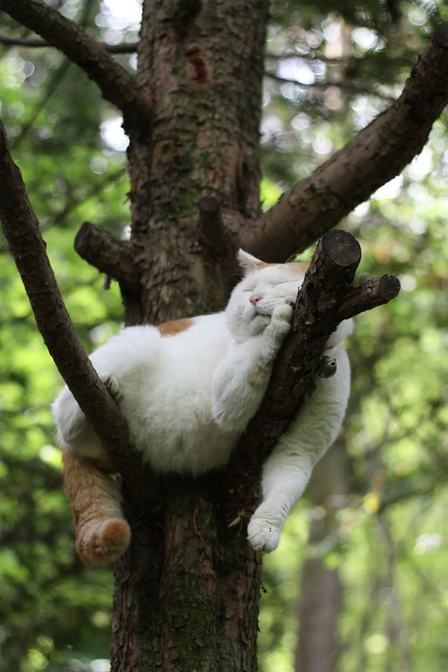sleeping-cats-in-trees-500-5f119668df0f9__700