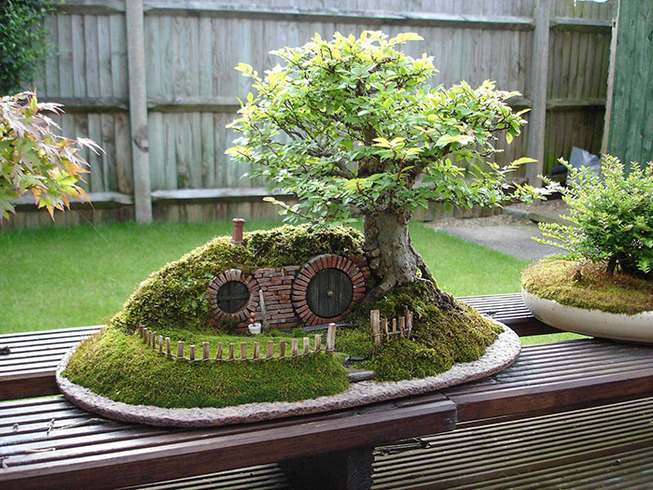 amazing-bonsai-trees-31-5710fa291dd89__700 (1)