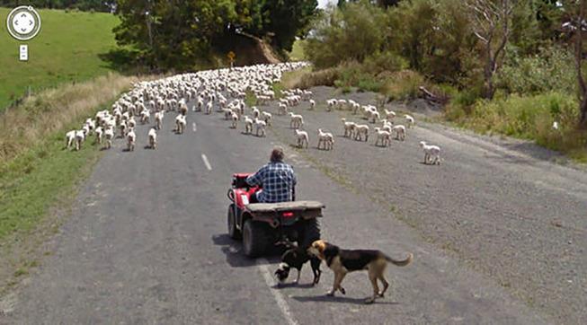 google-street-animals-5d2441d66d434__700