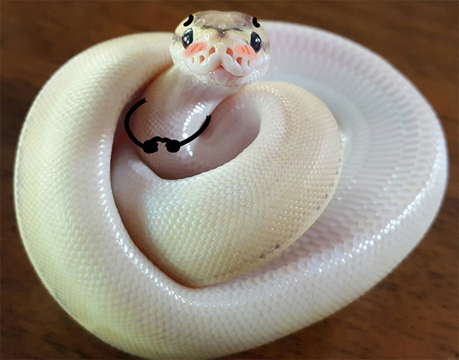 funny-snakes-arms-doodle-79-5d82120eb04b4__700