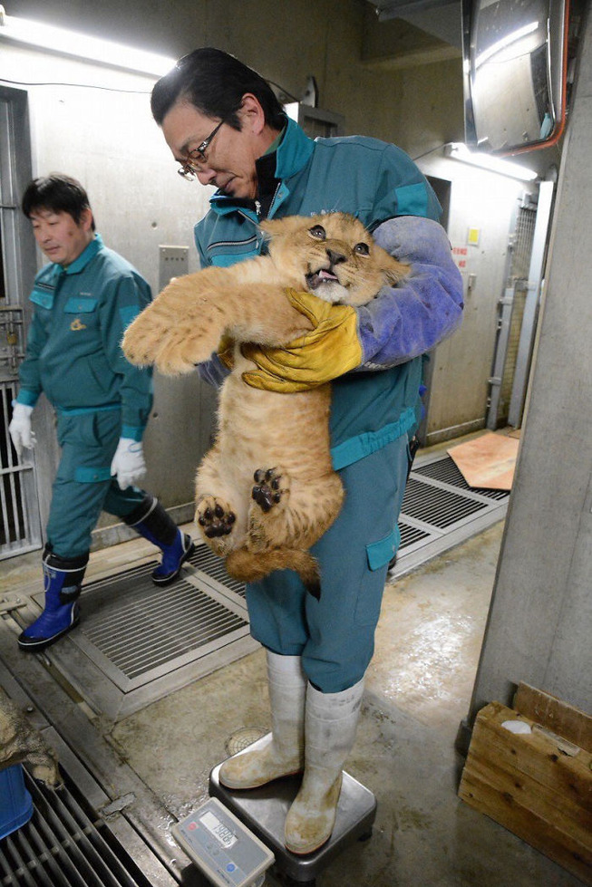 animals-being-weighted-5ee9d5154f809__700
