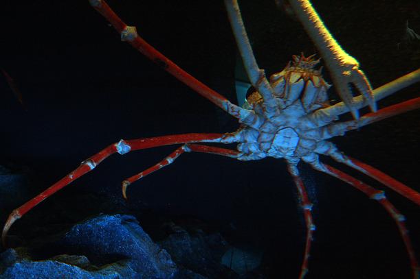 crab-001