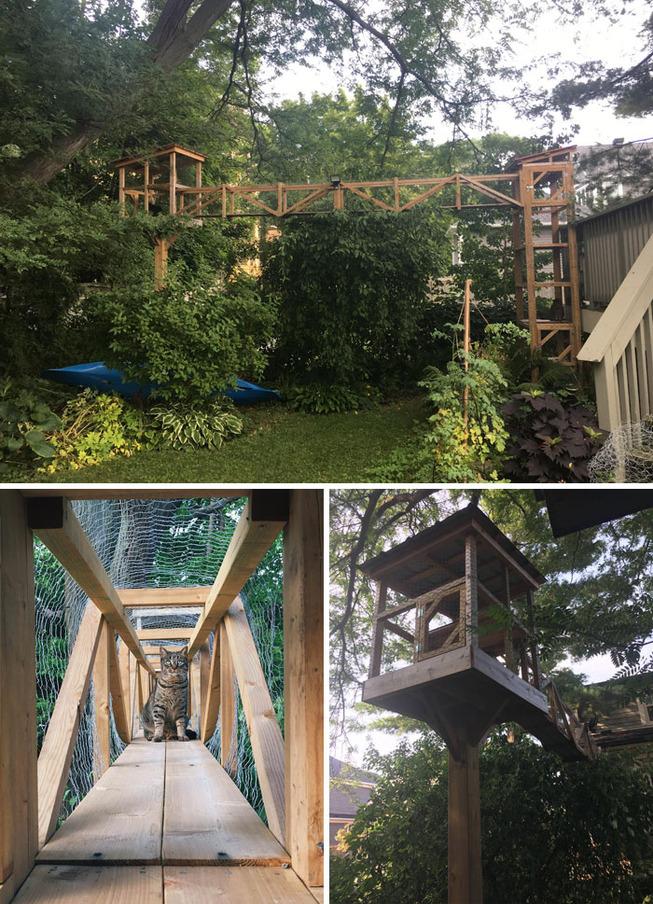catios-cat-patios-outdoor-enclosures-29-5cf76efb71415__700