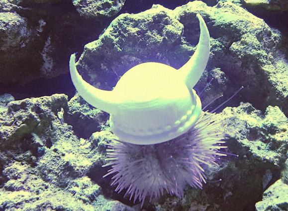 sea-urchins-tiny-hats-11-5fbba97cb7b49__700