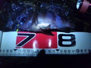 b797a26a.jpg