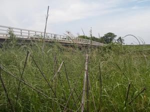 常総橋 (4)