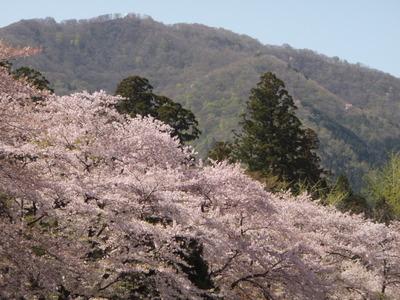 弥彦神社 (7)