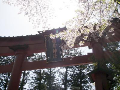 弥彦神社 (9)