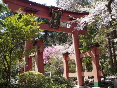 弥彦神社 (1)