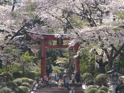 弥彦神社 (5)